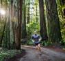 running-tall-trees